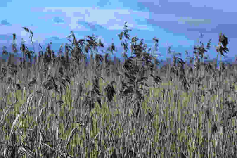 Агрофирму «Жупиков» оштрафовали на 400 тыс. рублей за заросшие сорняком поля