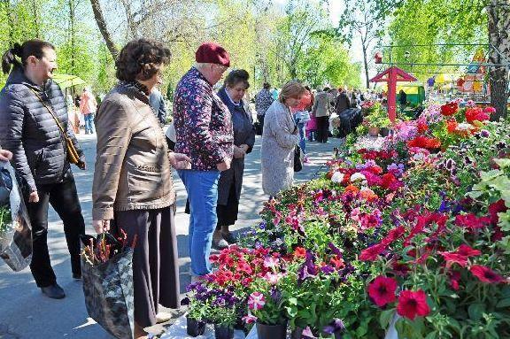 На фестивале цветов в Тамбове организуют Аллеи фиалок и роз