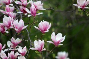 С17по19маявгородском парке Тамбова пройдёт Фестиваль цветов