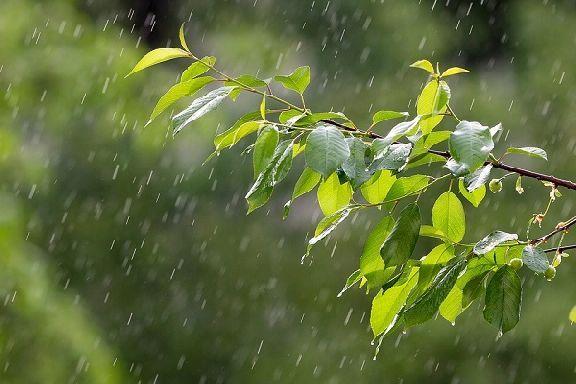 Синоптики рассказали о погоде в Тамбове на выходные