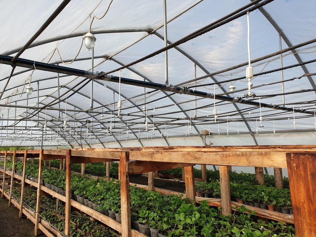 «Тамбовские сады» расширяют плантации клубники