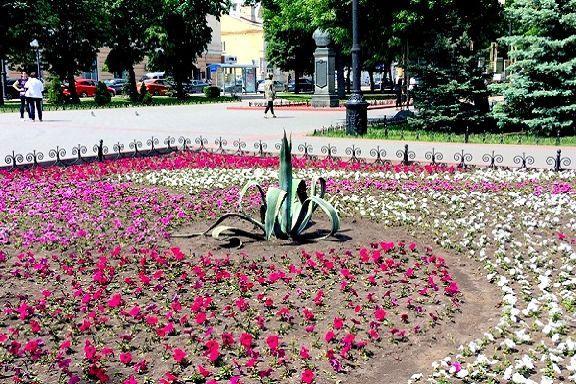 В сквере Петрова посадили необычное растение