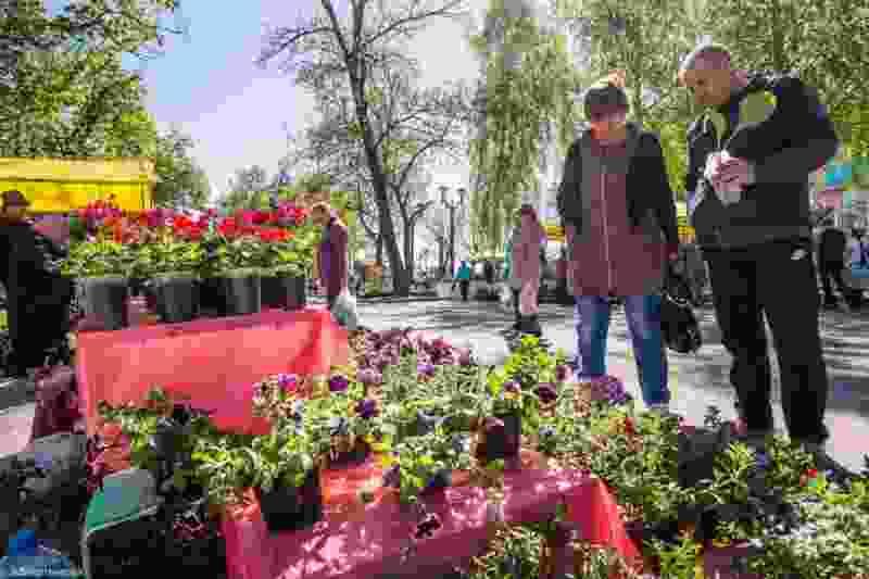 В Тамбове пройдет фестиваль цветов