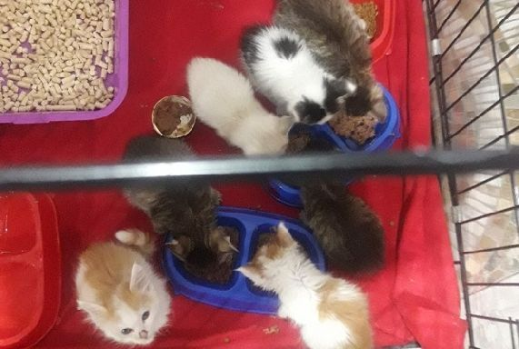 В Тамбове пройдёт благотворительный аукцион в поддержку приюта для животных