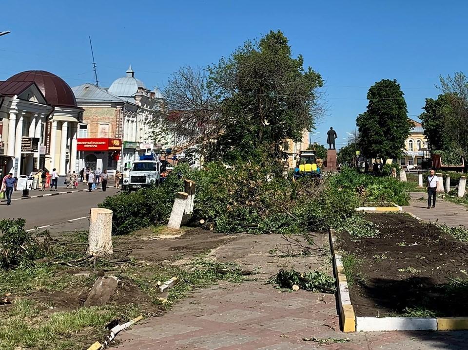 Администрация Мичуринска: спиленные в центральном сквере деревья «не имеют эстетической ценности»