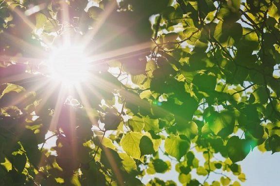 Тамбовскую область ждут жаркие выходные