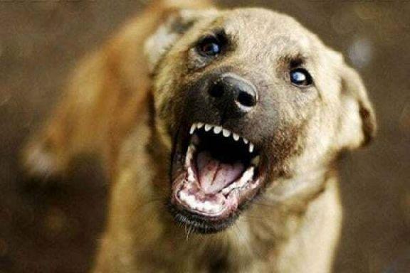 В Мичуринске стая бездомных собак обитает в очаге бешенства