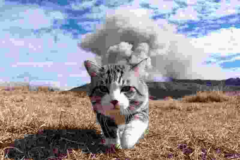 В Мичуринске бродячие коты отнимают у жителей продукты и поедают их домашних питомцев