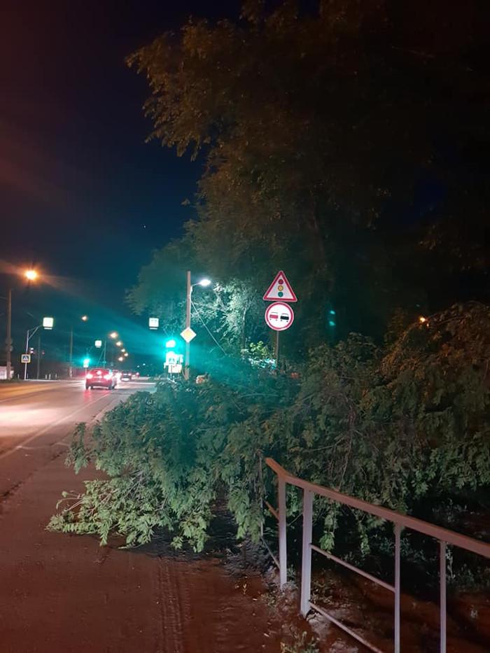 В сквере на западе Тамбова упавшее дерево повредило электрический кабель