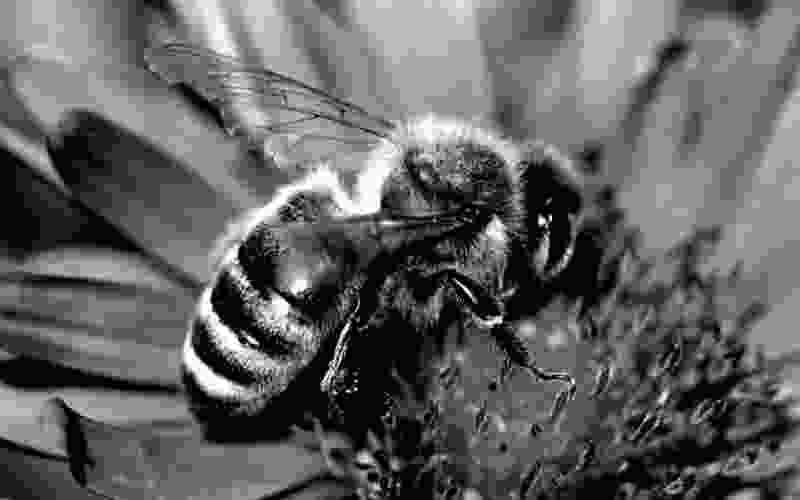 В Тамбовской области могут возбудить уголовные дела после массовой гибели пчёл
