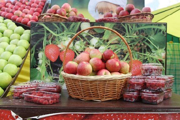 """На выставке """"День садовода"""" тамбовчане смогут сыграть в """"яблочные"""" шашки"""