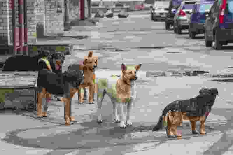Следственный комитет и чиновники ищут решение проблемы с нападениями бездомных животных в Мичуринске