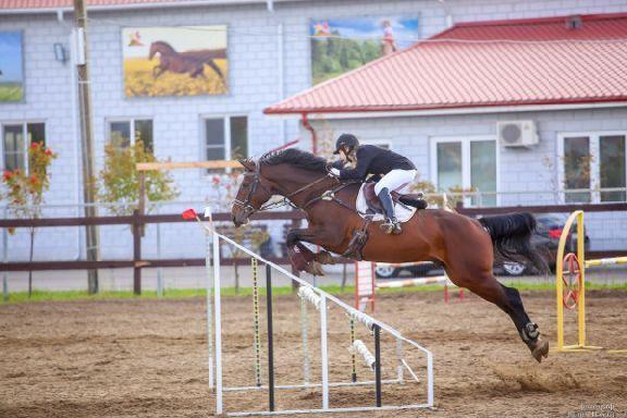 Стали известны чемпионы Тамбовской области по конкуру