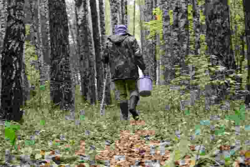 В Тамбовской области грибник нашел женский скелет