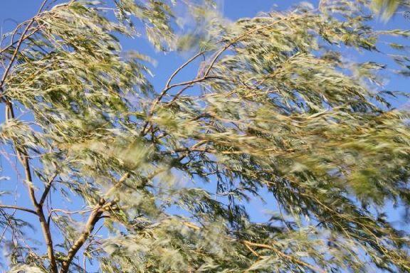 В Тамбовской области прогнозируется сильный ветер