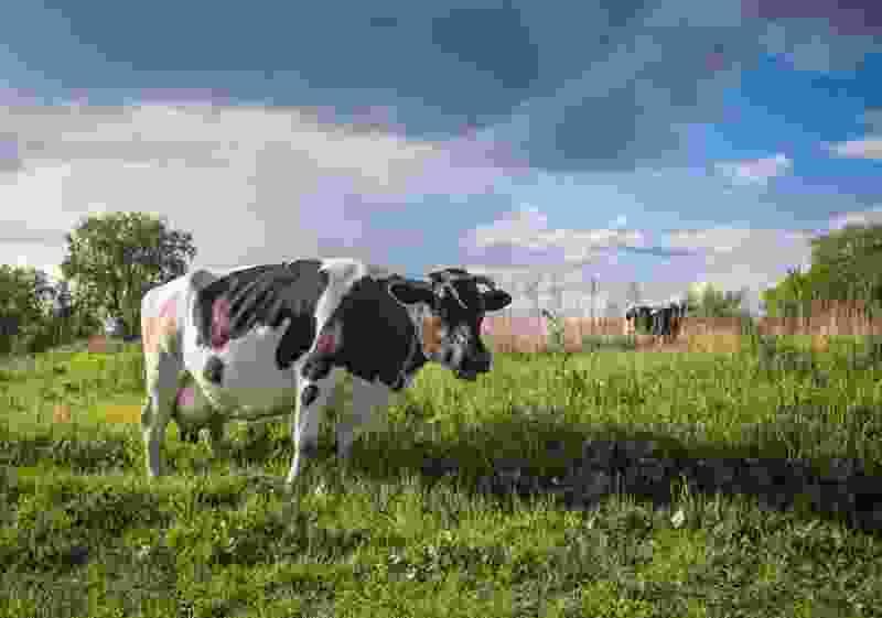 В Тамбовской области производство молока увеличилось на 200 тонн