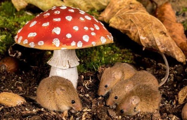 За прошедший месяц в Тамбовской области 22 человека отравились грибами