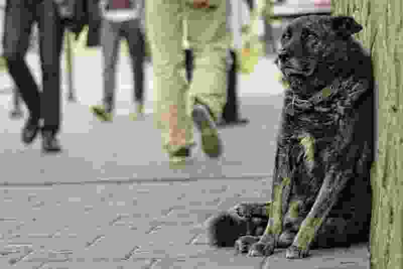 Жителей Моршанска терроризирует бродячий пес: покусано уже более 50-и человек