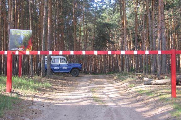 До 1 октября на территории Тамбовской области нельзя находиться в лесах