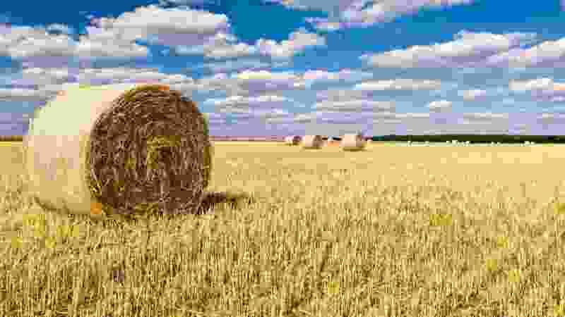 Тамбовская область получит из федерального бюджета 3 млрд рублей на поддержку сельского хозяйства