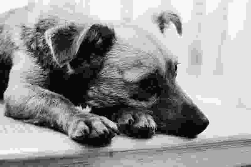 В Тамбовской области мужчина убил собаку прямо на глазах у детей