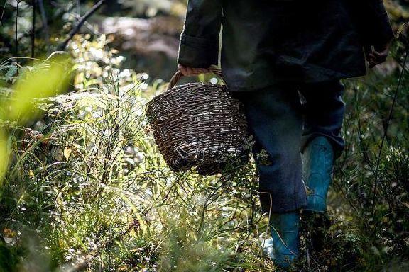 Грибники нашли тело пропавшей месяц назад тамбовчанки