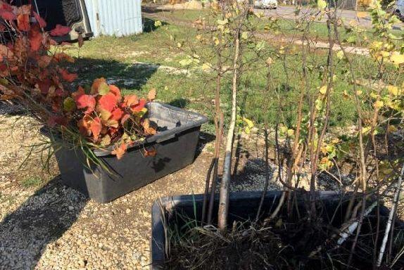 В новом сквере в Покрово-Пригородное высадят боярышник и берёзы