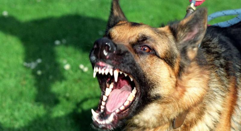 В Тамбовской области мужчину, натравивший овчарку на полицейского, приговорили к 5 годам колонии