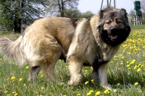 Житель Моршанска, натравивший собаку на полицейского, приговорен к лишению свободы