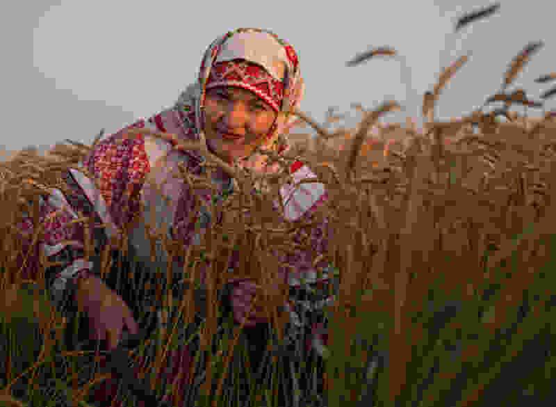 Тамбовская область вошла в пятёрку регионов ЦФО по темпам освоения господдержки сельского хозяйства