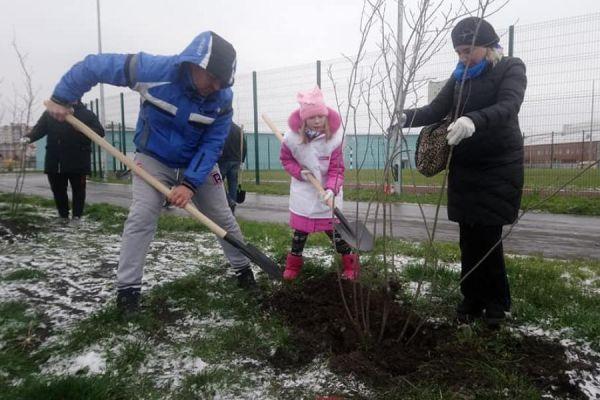 В Олимпийском парке высадили 250 молодых деревьев