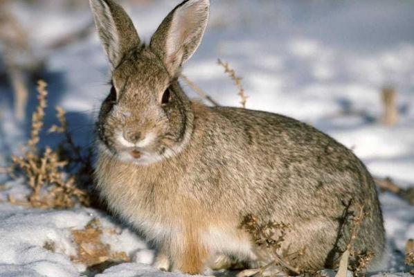 В Тамбовской области открыли сезон охоты на зайцев и бобров