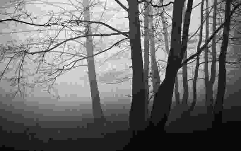 В Тамбовской области в посадках нашли тело 40-летнего мужчины