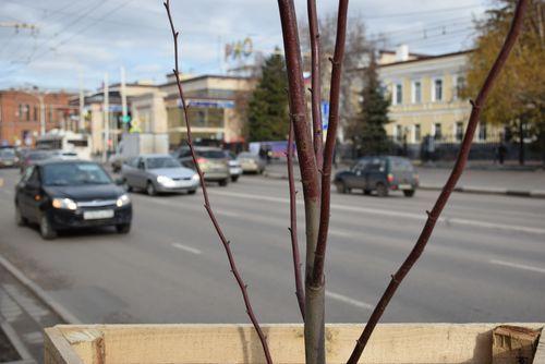 Зеленые улицы родного города