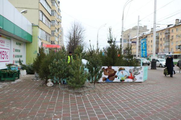Купить ёлку в Тамбове можно будет на 80 площадках