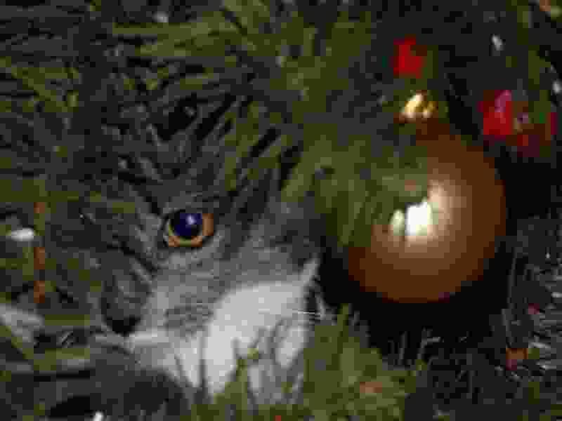 Перед новогодними праздниками в лесах Тамбовской области усилили охрану ёлок