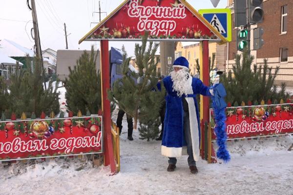 Ёлочные базары в Тамбовской области будут контролировать и проверять