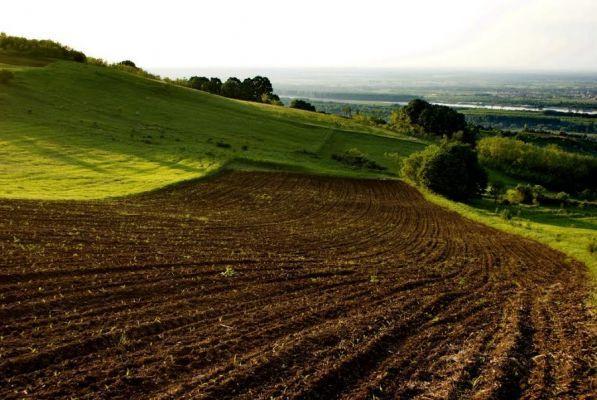 Администрация сельсовета в Сосновском районе продала сельхозземли без проведения торгов