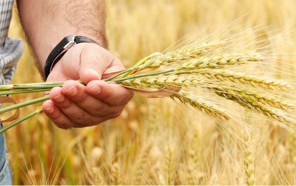 Для тамбовских фермеров расширят грантовую поддержку