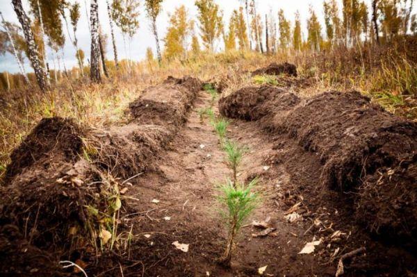 Лесовосстановительные работы в Тамбовской области начнутся раньше срока