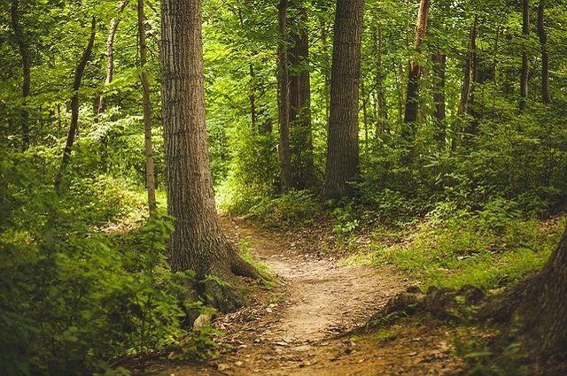 Собиравшую в лесу грибы женщину избил пьяный тамбовчанин