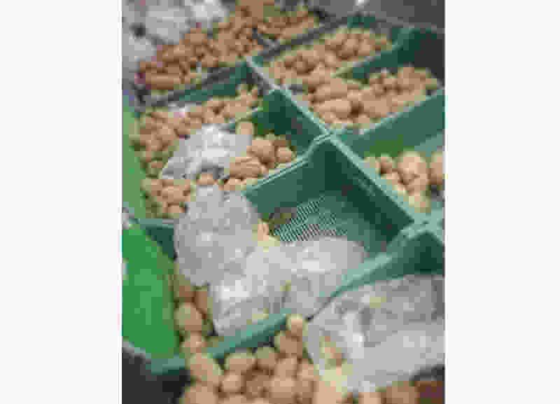 В одном из гипермаркетов Тамбова местные жители нашли мышь