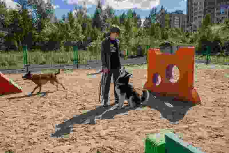 В Тамбове определили места для выгула собак