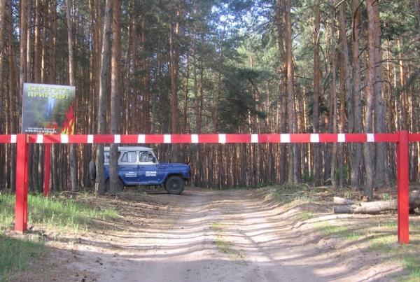 Леса в Тамбовской области продолжают усиленно патрулировать