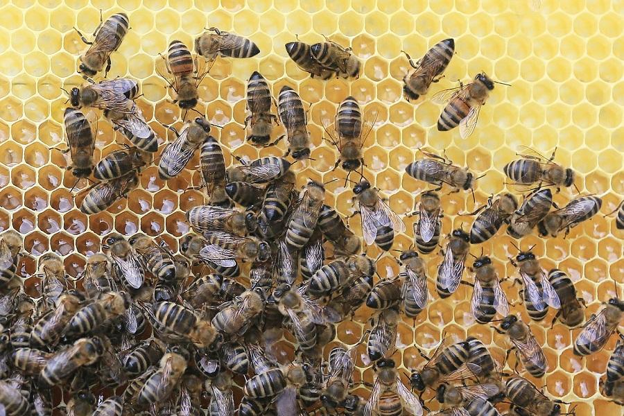 Работу тамбовчан с пчеловодами отметили в Минсельхозе