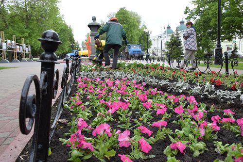 Улицы Тамбова украсят 2,5 миллиона цветов