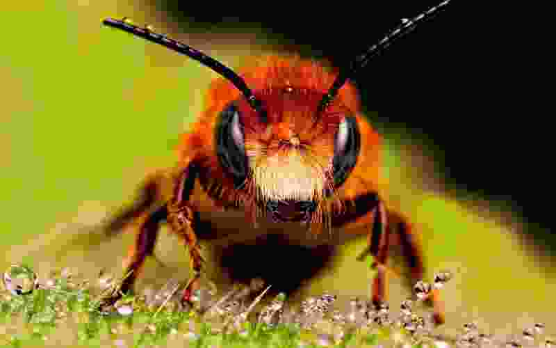 В Тамбовской области хотят создать пчеловодческий кооператив