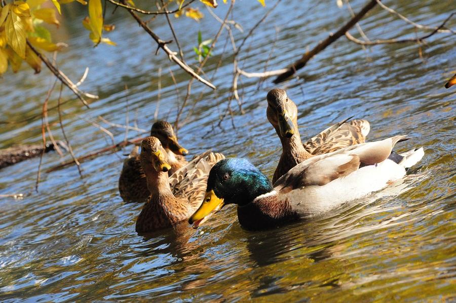 В Тамбовской области присоединились к празднованию международного дня биологического разнообразия