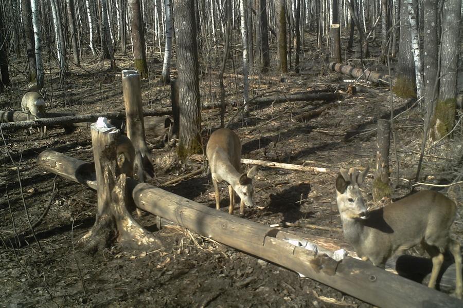 В Тамбовской области проверяют, как жители соблюдают правила охоты
