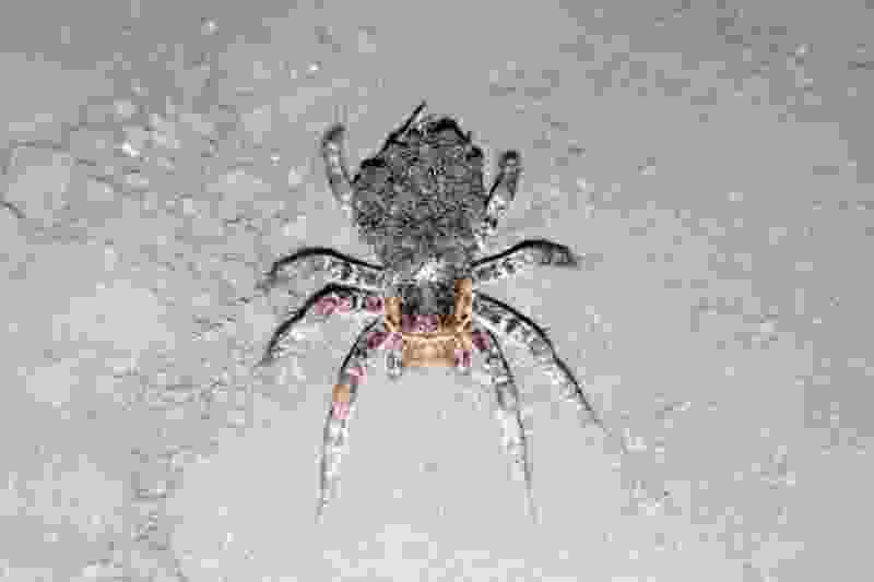 В пригороде Тамбова местные жители обнаружили тарантула